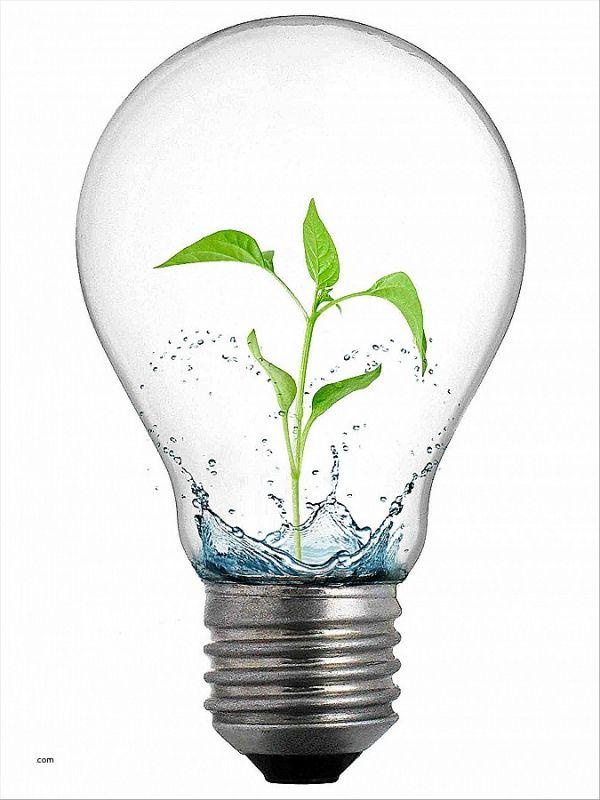 light-bulb-clip-art-png-unique-idea-icon-vector-latest-book-education-idea-information-of-light-bulb-clip-art-png-600x800